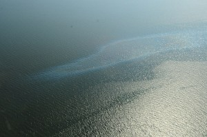 An oil sheen from the Frade OIl Spill offshore Brazil